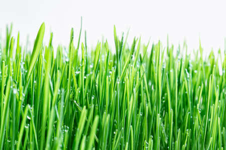 Green grass on isolated background