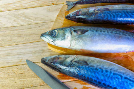 Nutritious, carcass of fresh, oily marine fish
