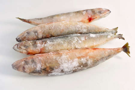 Frozen raw oceanic large fish