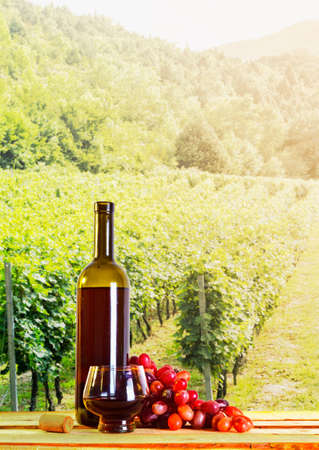 Wine in a bottle on a vineyard background