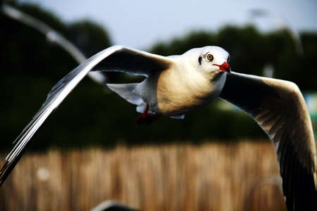 pu: Migratory birds at Bang Pu Thailand