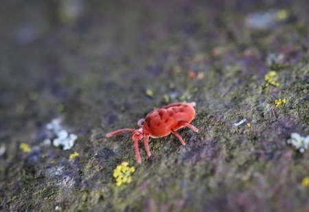 Ticks larvae, ticks, wood bucks, ectoparasites, ect