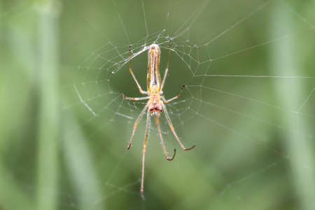 Running spider, on a plant, nature, macro
