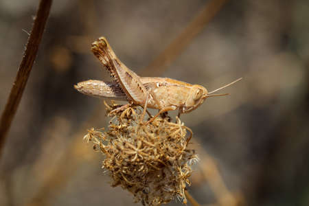 This is a Grasshopper or Its a locust!