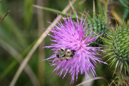 this is the flower a plant with a bee Stock Photo