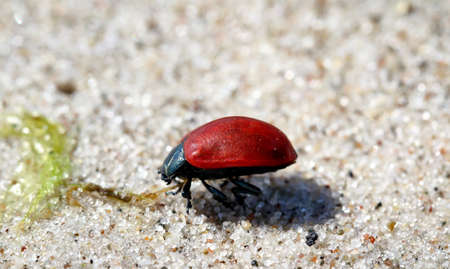 beatle on sand