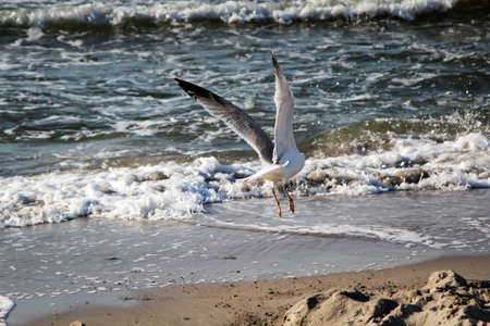 seagull fly over sea Stock Photo