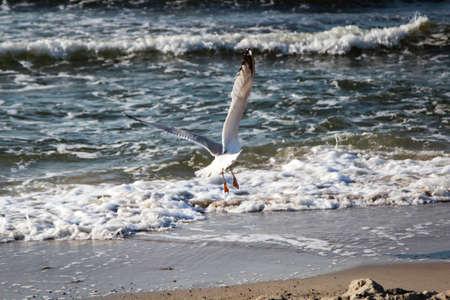 seagull over the beach