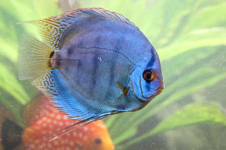 Colored discus Stock Photo