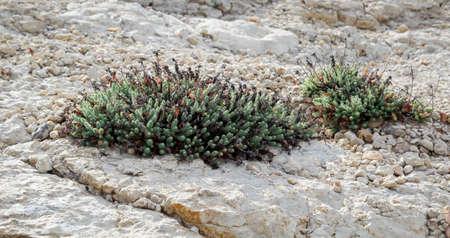 Moss growing between stones