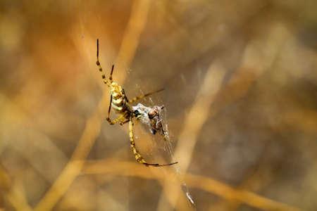 Detalles de una araña Foto de archivo