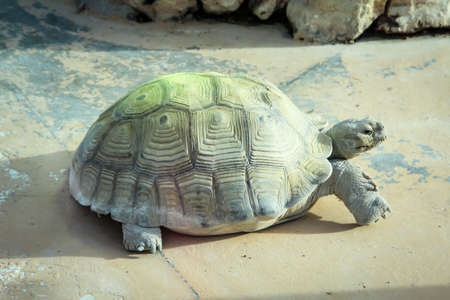 this is a turtle, country turtle