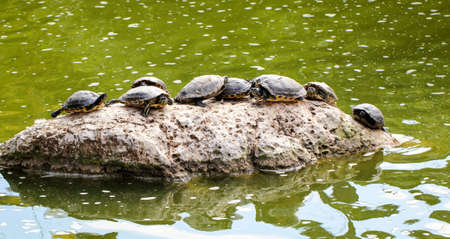 turtles on a rock