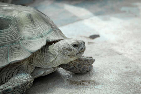 close up, details of turtle, turtles