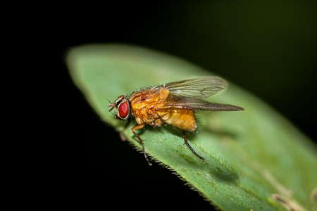 a fly on a plant Banco de Imagens