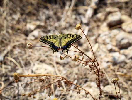 A butterfly, swallowtail in the grass 스톡 콘텐츠