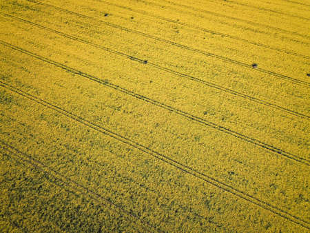 a rape field in its bright colors from the air Stock fotó