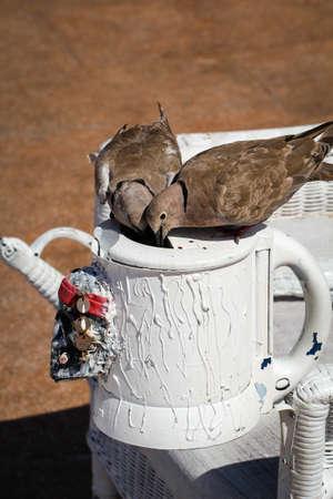 A close up of a wild dove Reklamní fotografie