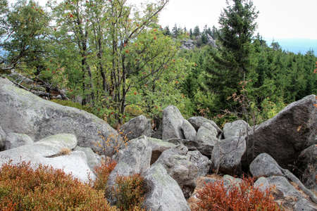 Rock formation and forest in the Harz mountains Stock Photo