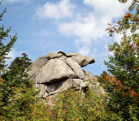 Rock formation and forest in the Harz mountains