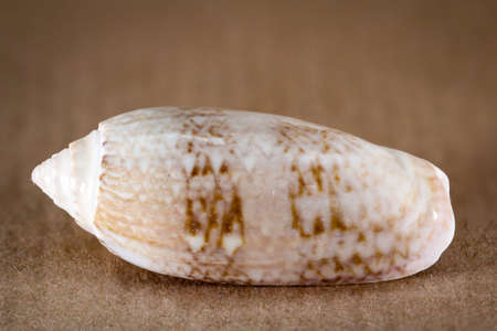 Detail of a shell, remains of a shell