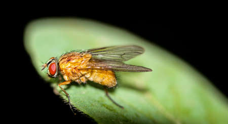 Fly on the leaf
