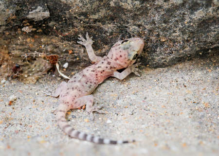 detail of a lizard on a stone
