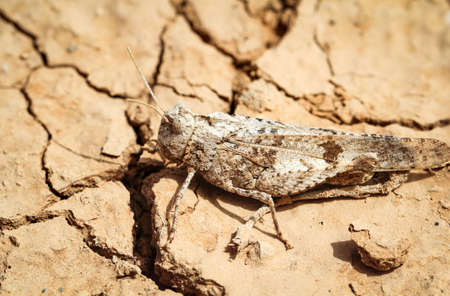 a brown grasshopper sitting on sand