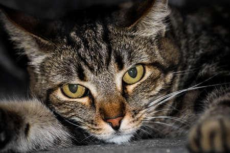 Cat close up Stockfoto