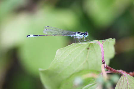 a dragonfly bask in the midday sun