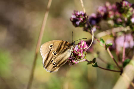 Close-up of a butterfly, rambling on a plant