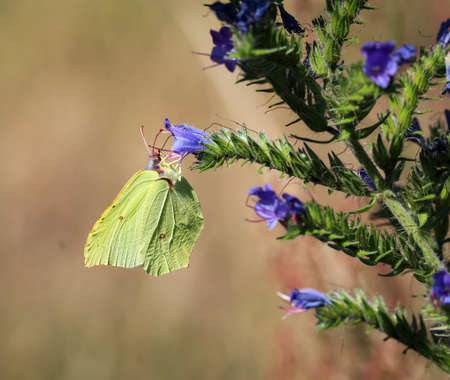 Nature background butterfly. Butterfly insect in nature. Nature insect butterfly on a flower plant. Butterfly in nature.