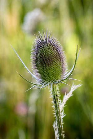 Closeup of wild carde flowers