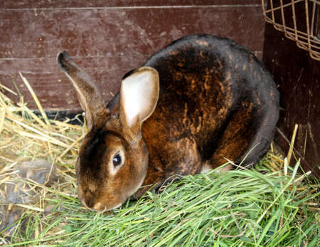 A rabbit sits between grass and hay in the barn