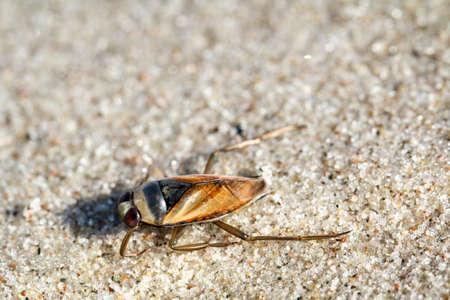 Ansicht, Makrofotografie eines kleinen Käfers