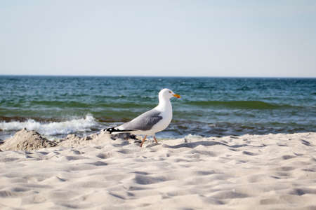 View, portrait of a seagull. Seagulls are just part of the beach vacation