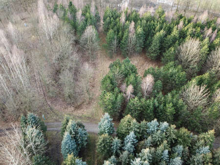 A forest, trees seen from the air