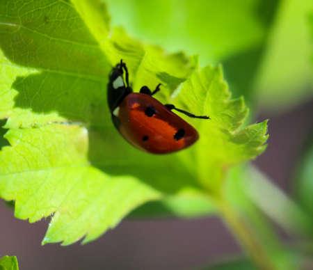 Ein Marienkäfer auf einer Pflanze Standard-Bild