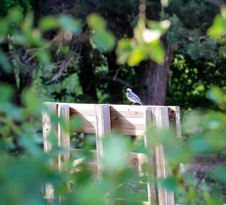 A bird, songbird on a fence Imagens