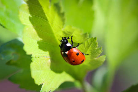A ladybug on a plant Stock Photo