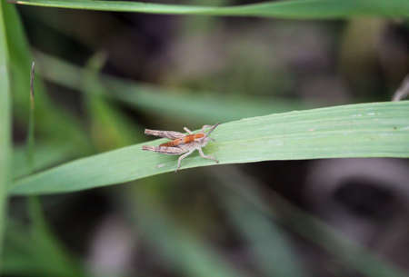 A brown grasshopper on a plant