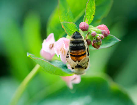 A bee on a blossom