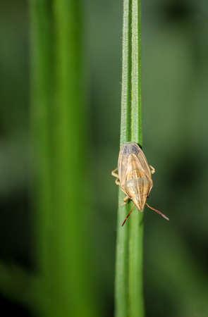 Makro eines Fehlers auf einer Pflanze