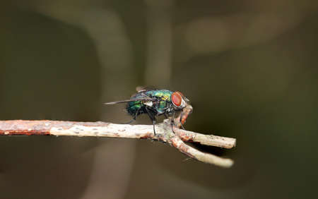 A fly, insect on a plant