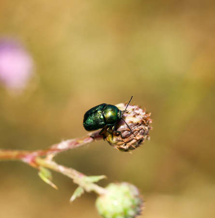 Macro of a beetle on a plant Banque d'images - 132221768