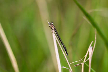 Portrait, macro of a dragonfly Banque d'images - 132221976