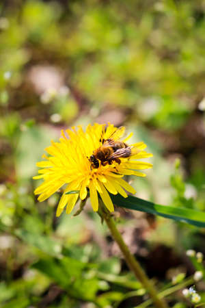 A bee on a blossom, plant