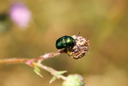 Macro of a beetle on a plant