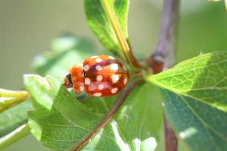A ladybug on a plant 版權商用圖片