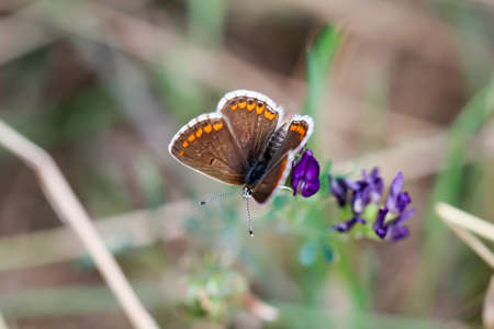 Macro of a butterfly Imagens